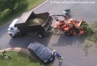 Aerial view from Tim Corbin's Tree Service bucket truck.